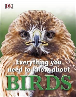 Everything you need to know about bird